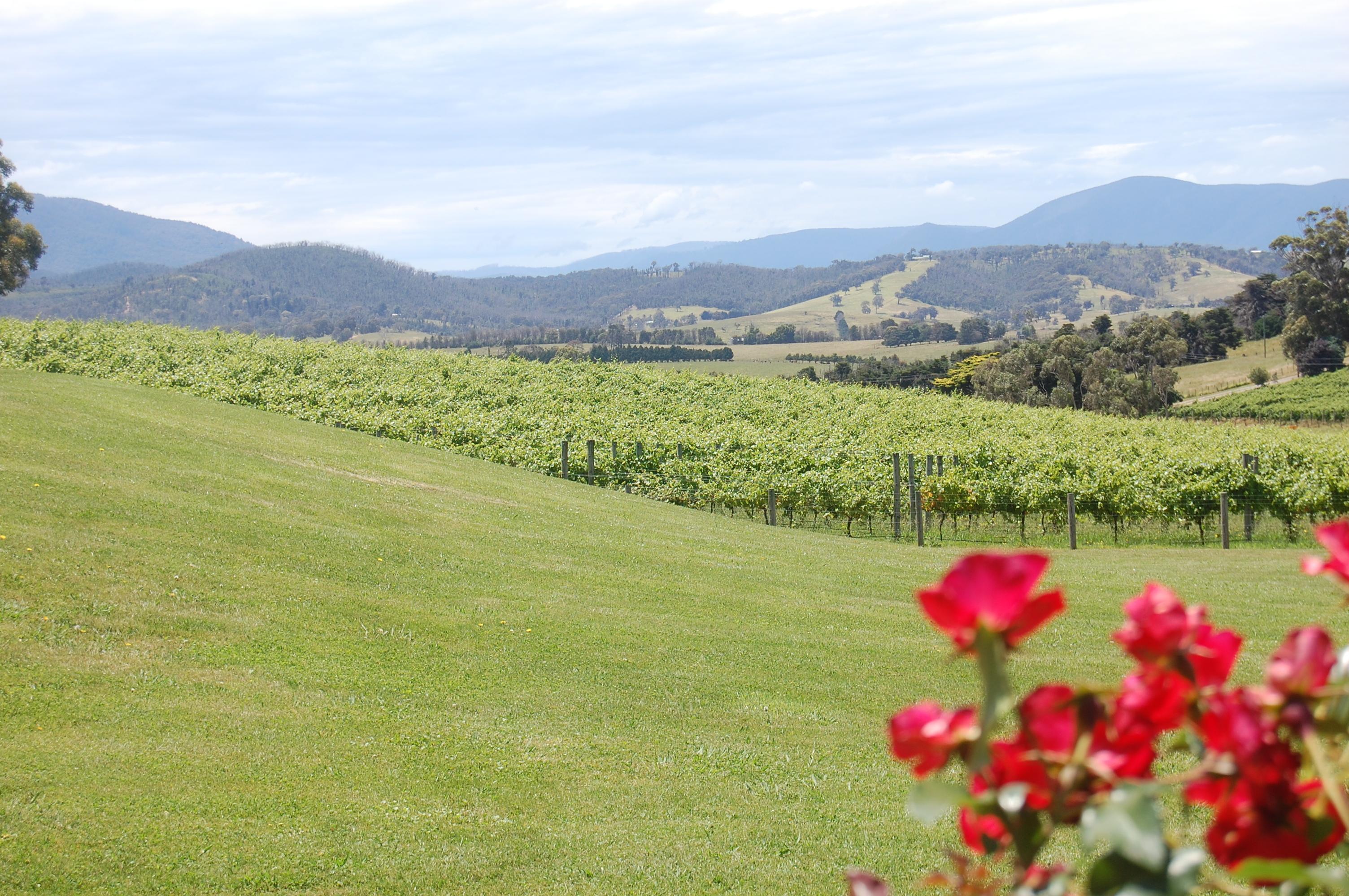 yarra valley - victoria australia sabrina barbante
