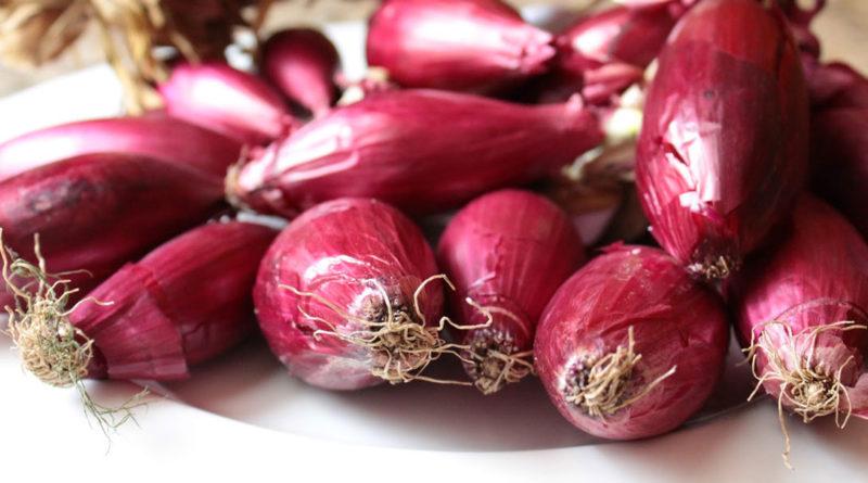 <strong>Viaggio nei luoghi dellaCipolla di Tropea, l'oro rosso della Calabria (e ricette semplici e buonissime)</strong>